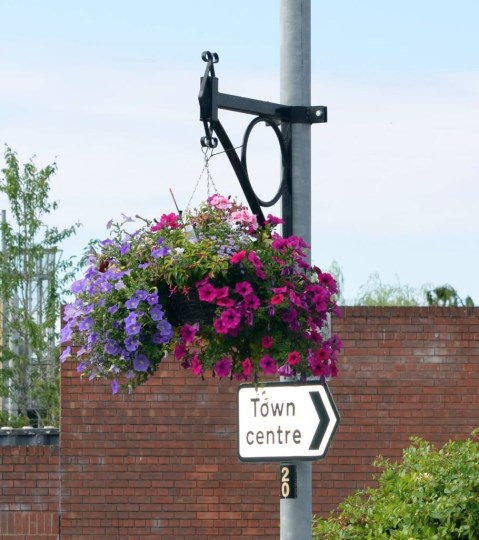 Hanging Basket in Amesbury