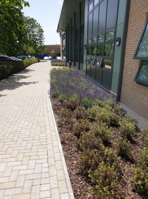 Landscaping for Stonehenge School